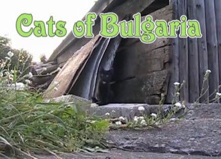 Cats of Bulgaria