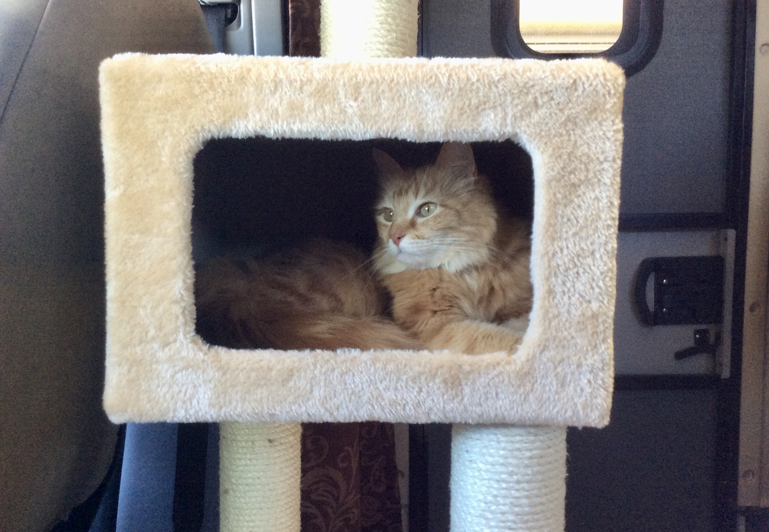 Madeleine in the cat tree