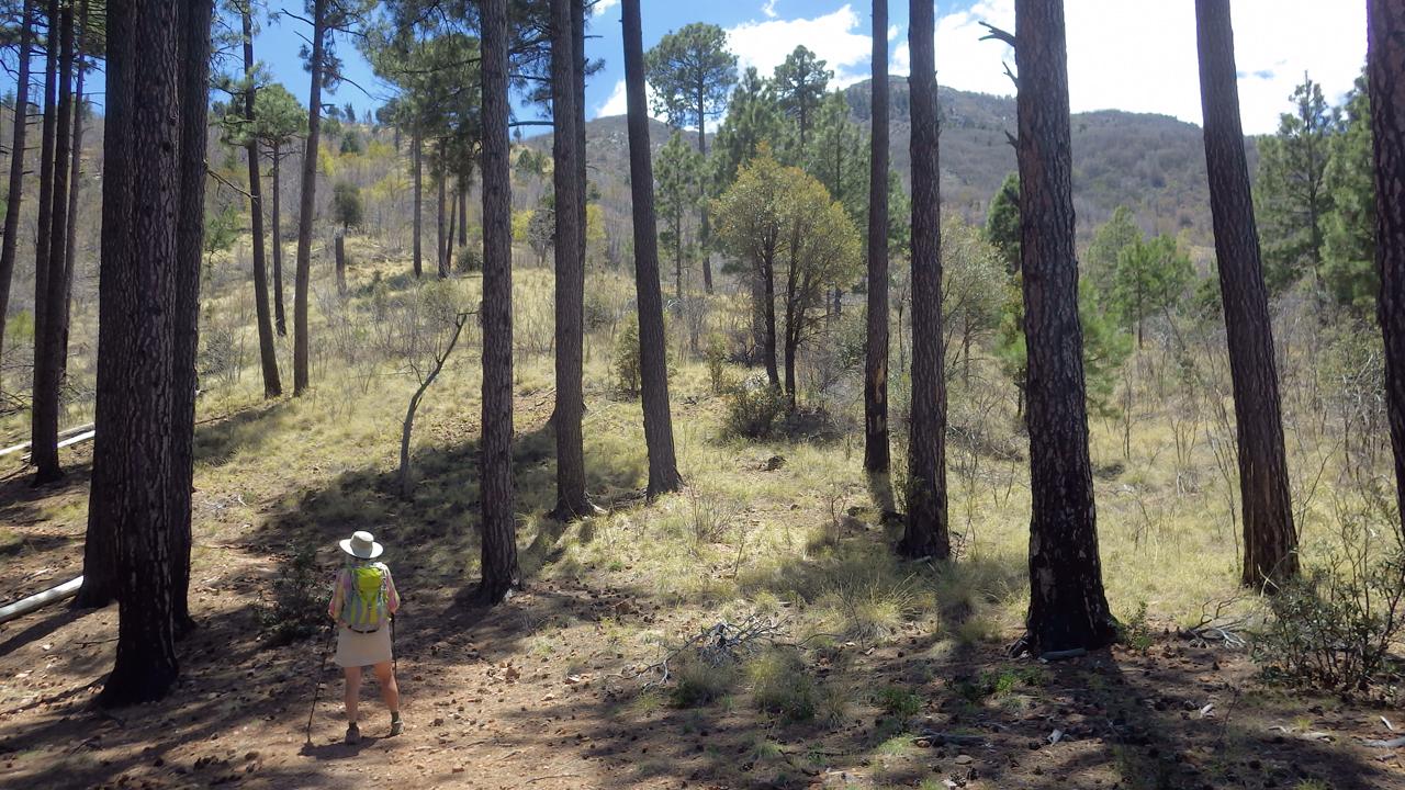 Carr Peak Trail