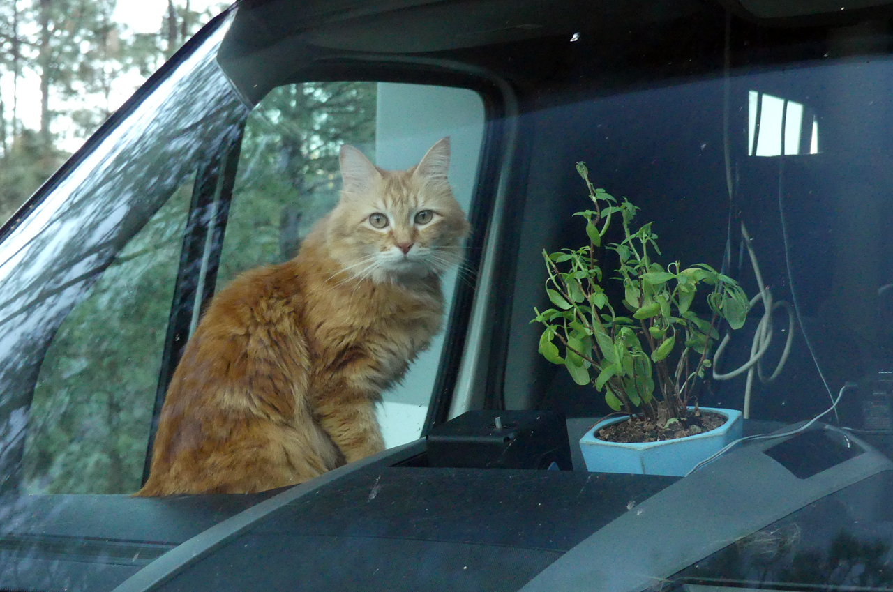 Cat and basil plant