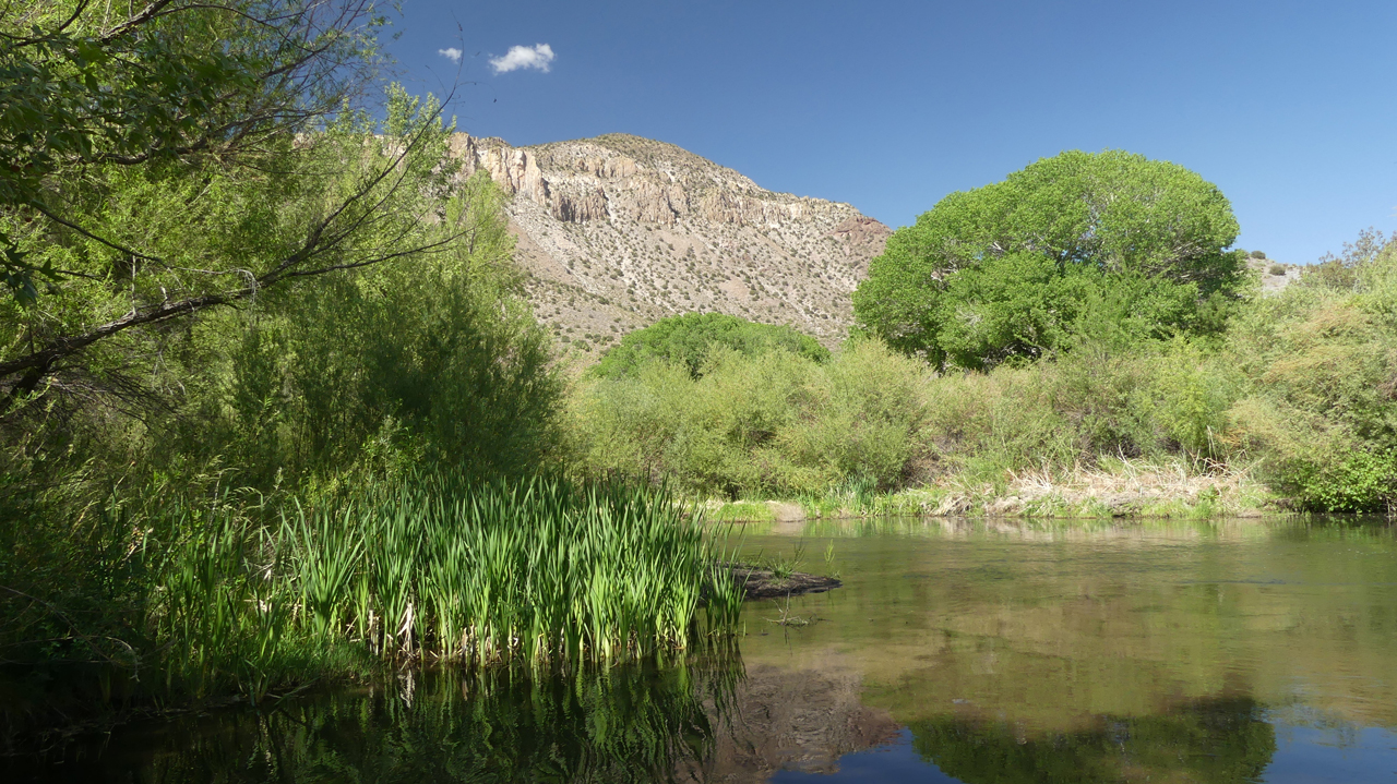 cattails in the water and big cliffs