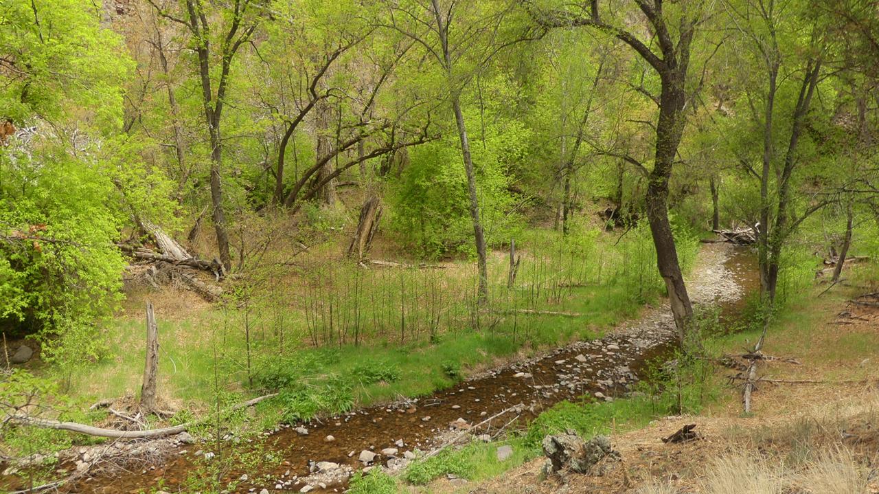lush streamside