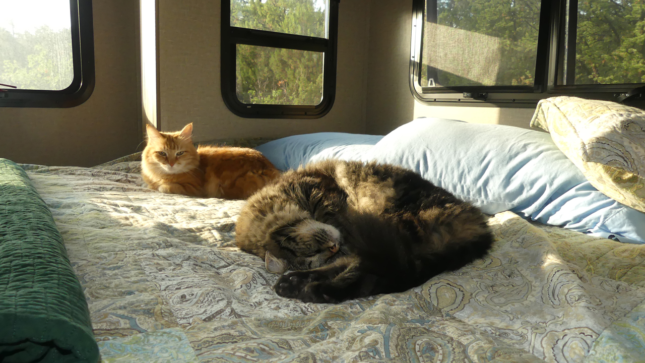 RV cats