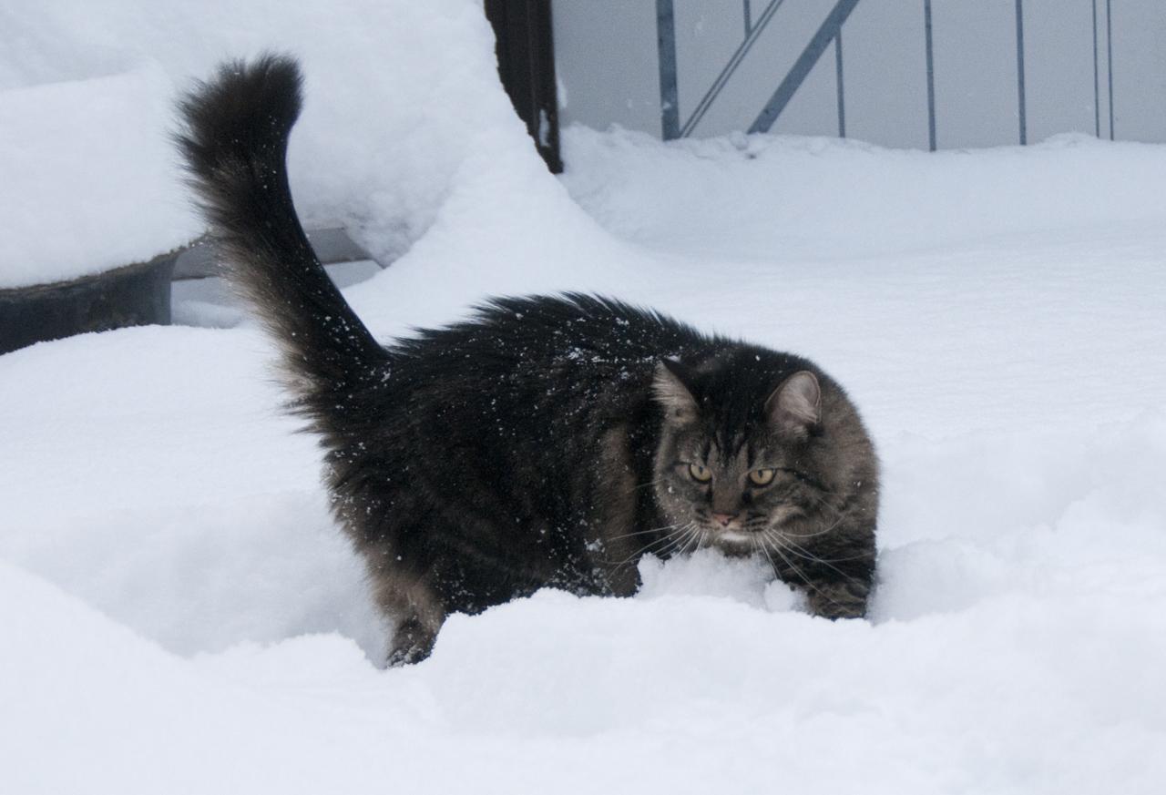 Elio discovers snow