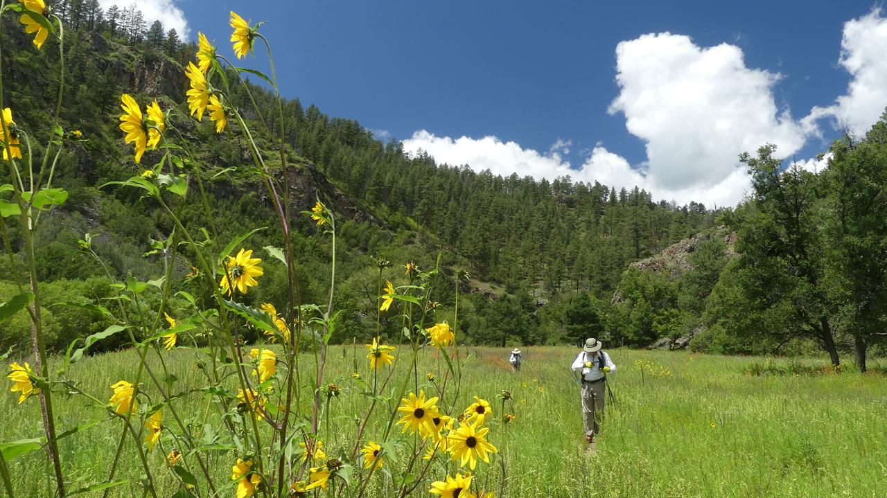 meadow full of wildflowers