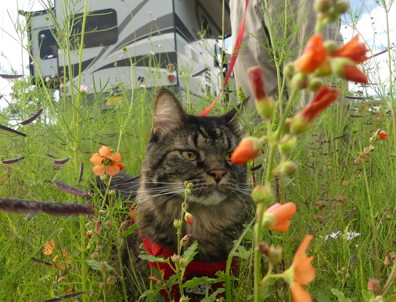 Elio in the flowers