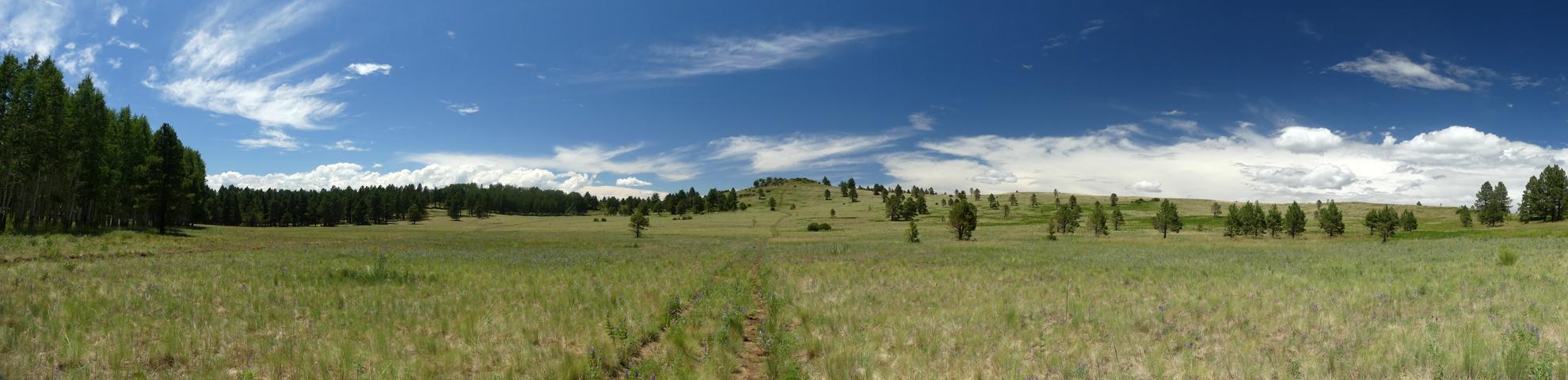 Hart Prairie panorama