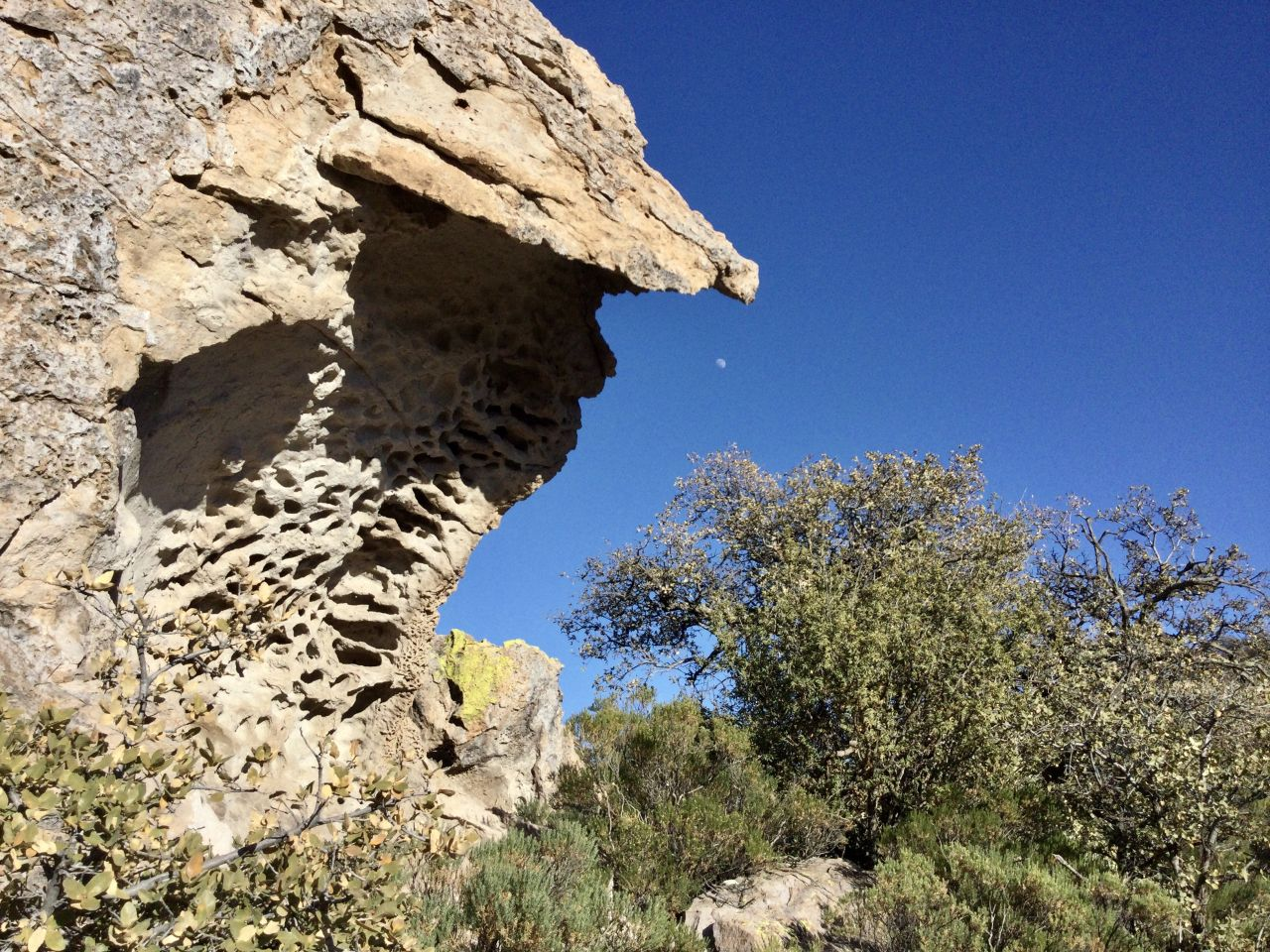 deeply veined rock